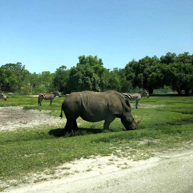 Florida Rhino